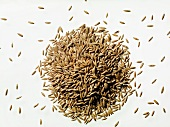 Typhon oats