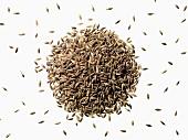 Black barley