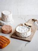 Various types of soft cheese