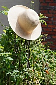 A straw hat on tomato plants in the garden