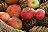 Apples and pine cones in a basket