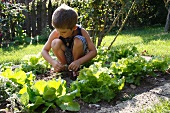 Young boy squatting in a bed of lettuce