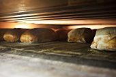 Various types of bread in an oven