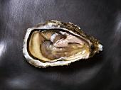 A Prat Arcoum oyster