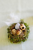 Quail's eggs in an Easter nest