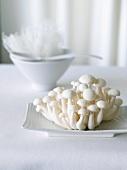 Cluster of White Beech Mushrooms