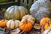 Various types of pumpkins on a wooden bench