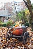 Handcart full of pumpkins in garden
