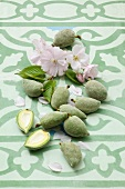 Green almonds and almond flowers on a ceramic surface