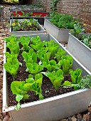 Old metal troughs from the bulky waste as beds for vegetables and flowers in a stony garden