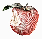A red apple with a stem and a leaf with a bite out of it (illustration)