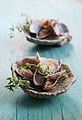 Clams in white wine, in a fossilised scallop shell