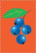 A sprig of blueberries against an orange background (illustration)