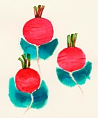 Radishes (illustration)
