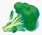 Broccoli (illustration)