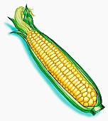 A corn cob (illustration)