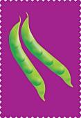 Green beans (illustration)