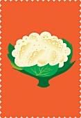 A cauliflower (illustration)