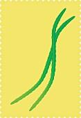Long green beans (illustration)