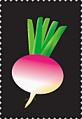 A turnip against a black background (illustration)