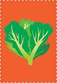 A lettuce (illustration)