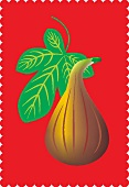 A fig and a fig leaf against a red background (illustration)