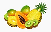 An arrangement of exotic fruit: mango, pineapple, papaya, kiwis (illustration)