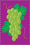 Green grapes with leaves on a purple background (illustration)