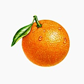An orange with a stalk and a leaf (illustration)