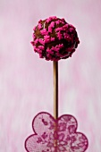 A chocolate cake pop decorated with sprinkles