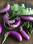 Organic Hydroponic Eggplants