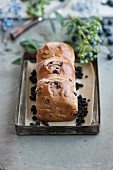 Buchteln (German brioche) with dried blueberries