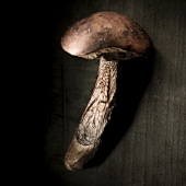 Red-capped mushroom against a black background