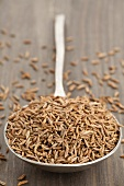 A spoon full of cumin seeds