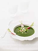 Cress soup with radishes