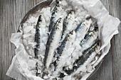 Raw sardines on ice
