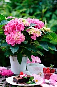 Pink hydrangeas in a pot with desserts on a table in the garden