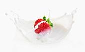 A splash of milk as a strawberry falls into milk