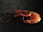 A king prawn