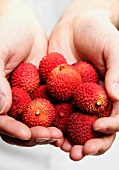 Hands holding lychees