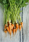 Baby carrots on a tea towel