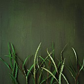 Decorative plants against a green wall
