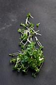 Broccoli shoots (organic) on a dark surface