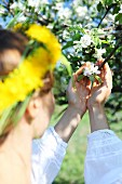 A young woman with a dandelion wreath in her hair looking at white blossom on an apple tree
