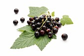Blackcurrants on a leaf