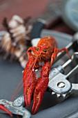 Crawfish on a Corkscrew
