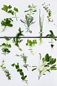 A display of fresh herbs