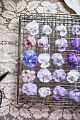 Candied Pansies and Violas
