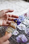 Making Candied Pansies and Violas