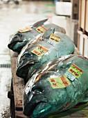 Tuna at Tokyo fish market